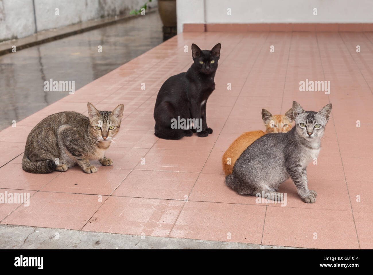 A group of cats staring in the camera - Stock Image