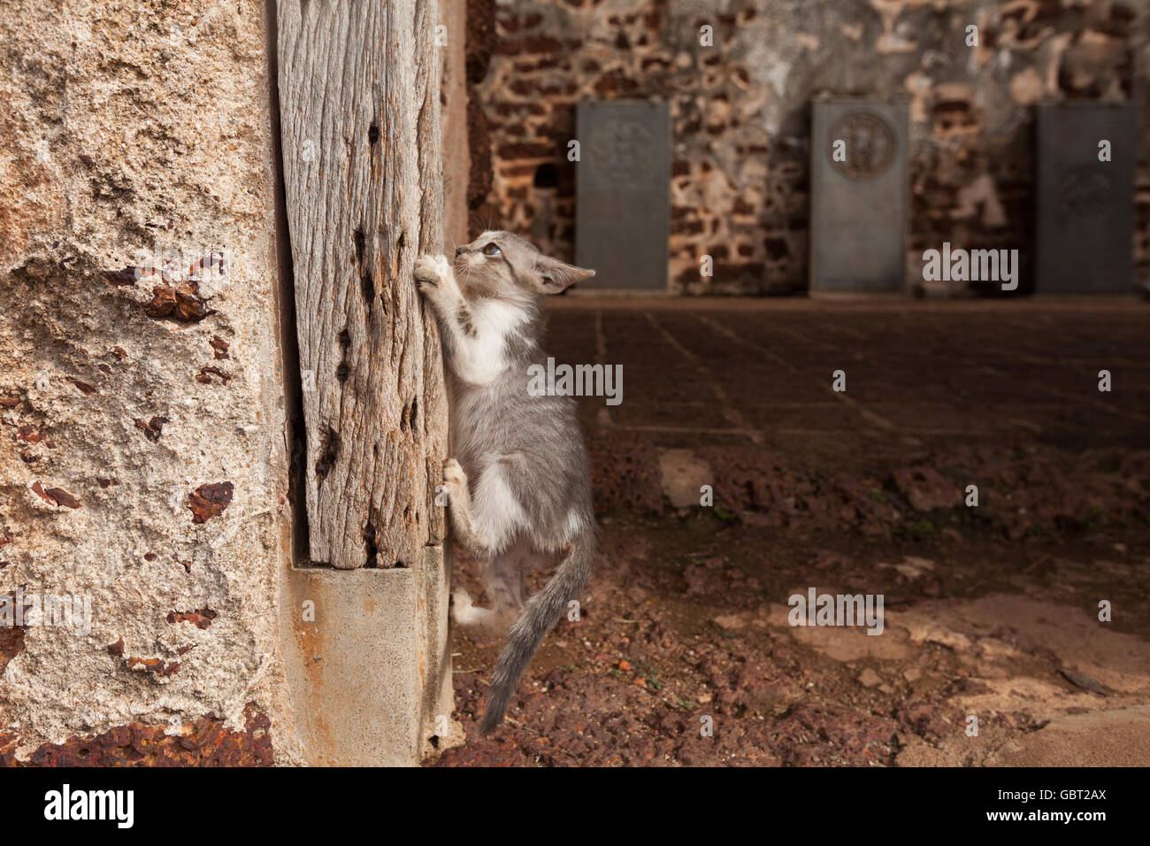 A kitten learning to climb onto an old wooden pillar. - Stock Image