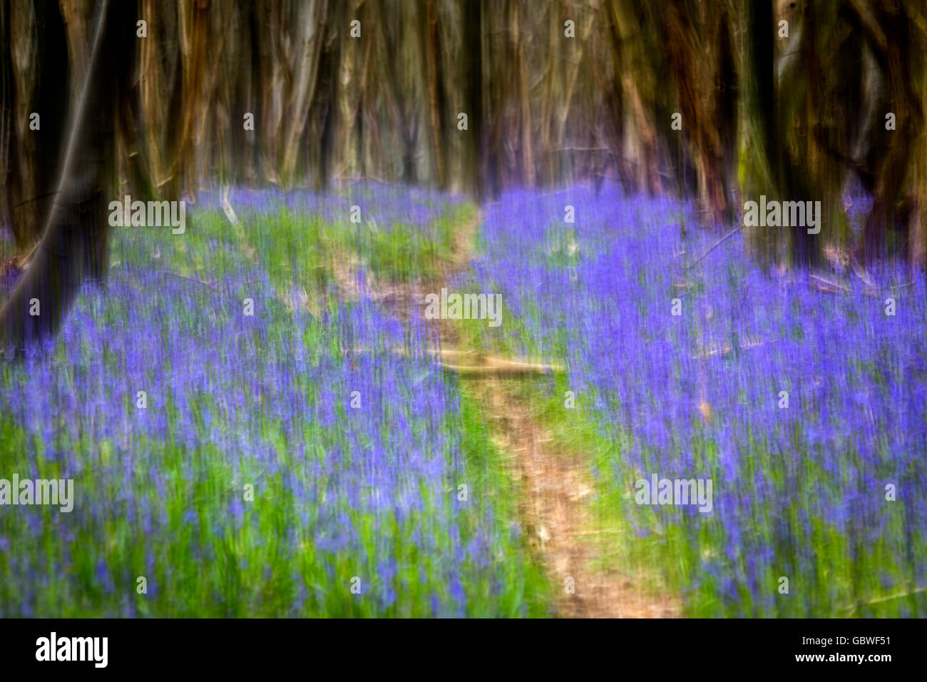 Impressionist view of spring bluebells in a Kent wood, United Kingdom. - Stock Image