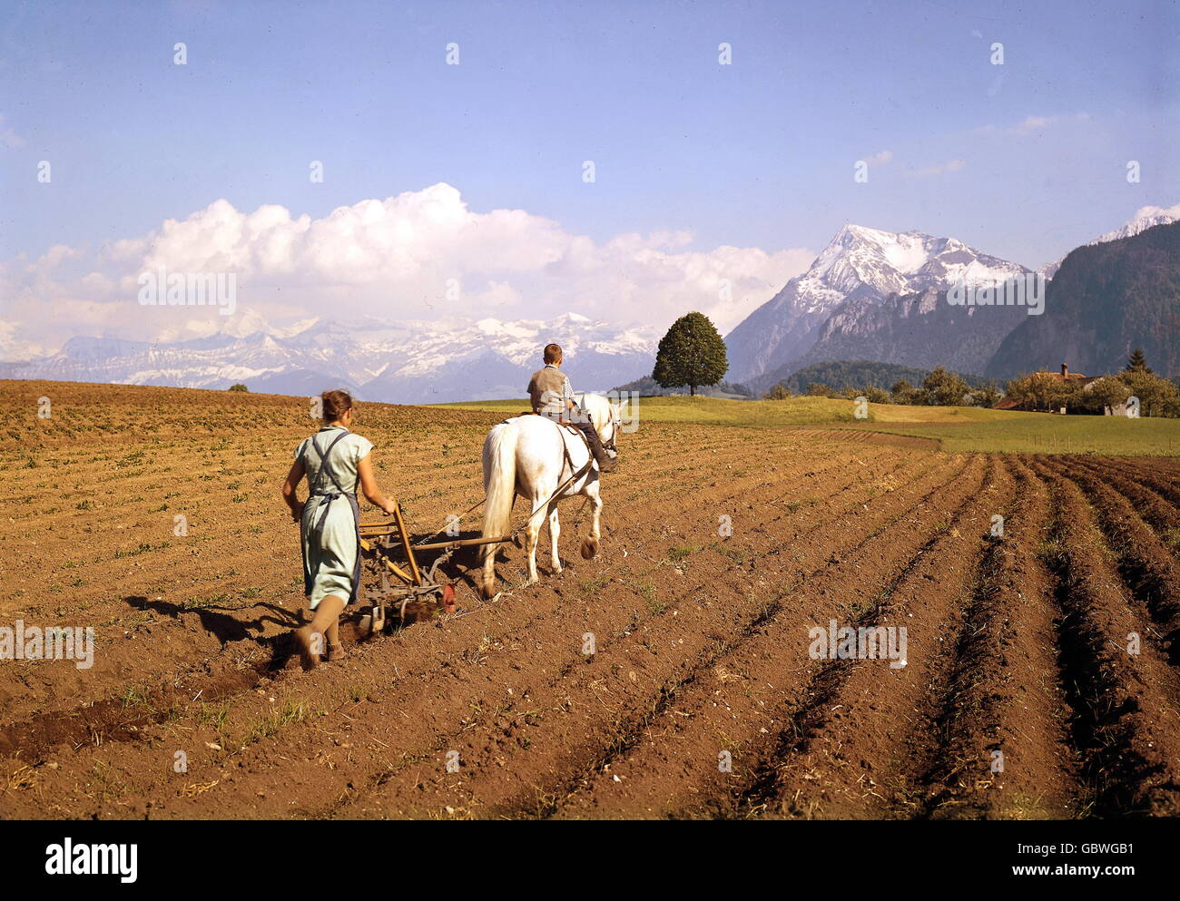 agriculture, cultivation, woman on field, ploughing, near Stocken, Bernese Oberland, Switzerland, 1960s, , Additional - Stock Image