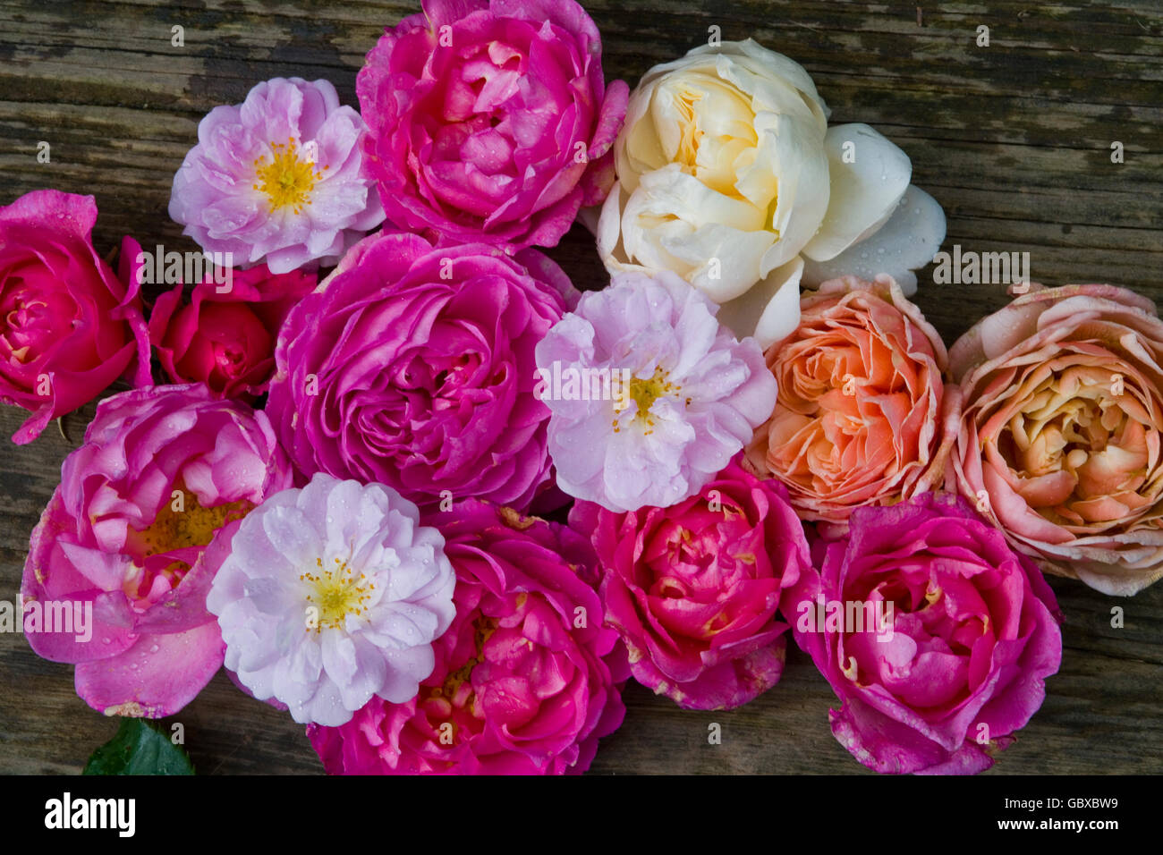Bunch of roses - Stock Image