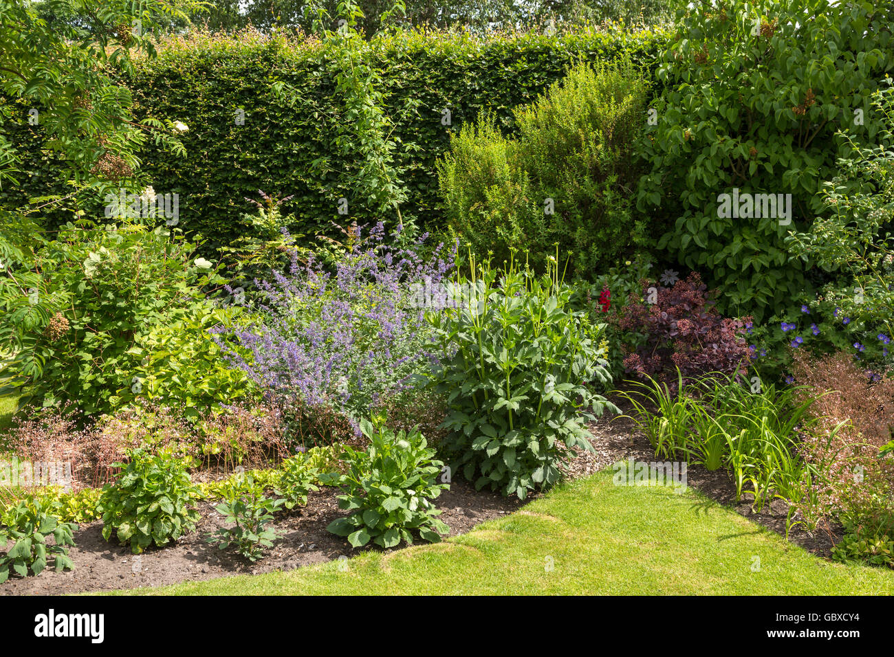 Back garden shrubbery in England - Stock Image
