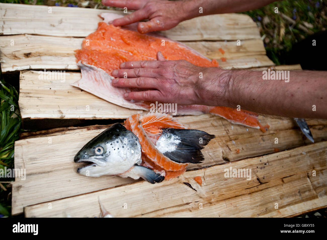 Bushcraft Salmon cooking - Stock Image