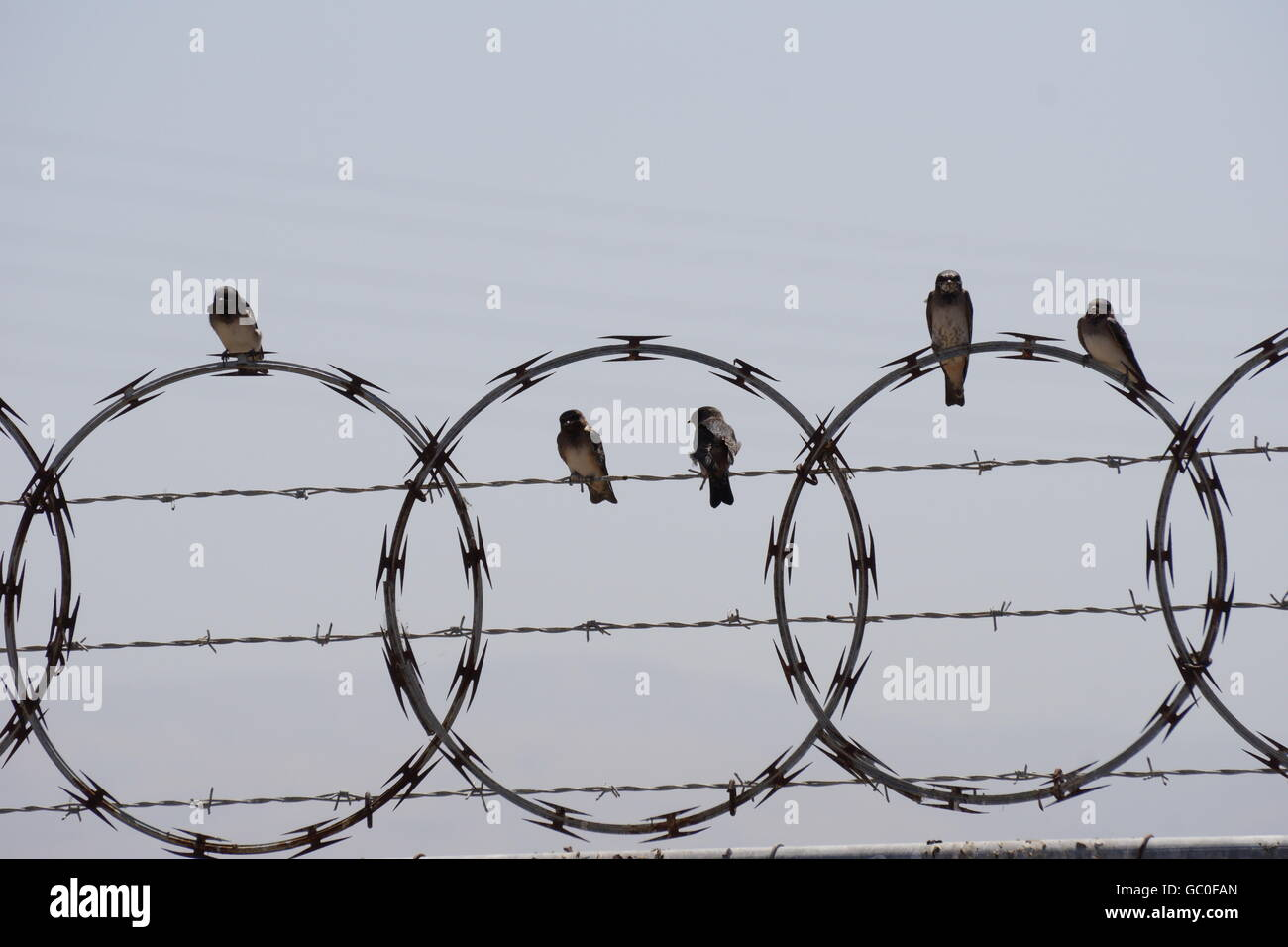 Blurred Wire Fence Stock Photos & Blurred Wire Fence Stock Images ...