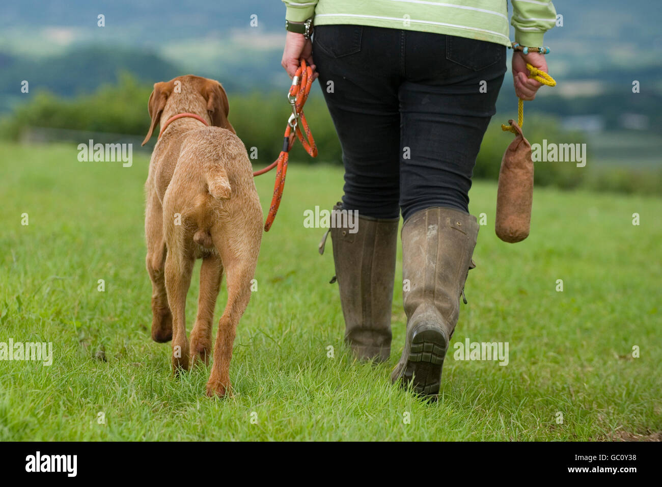 Person teaching a dog to walk to heel - Stock Image