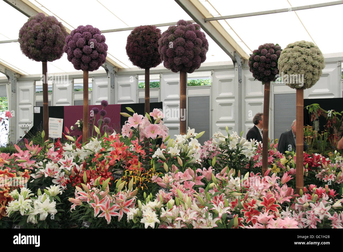 Gold Medal winner: HW Hyde & Son, Floral Marquee, RHS Hampton Court Palace Flower Show 2016 - Stock Image