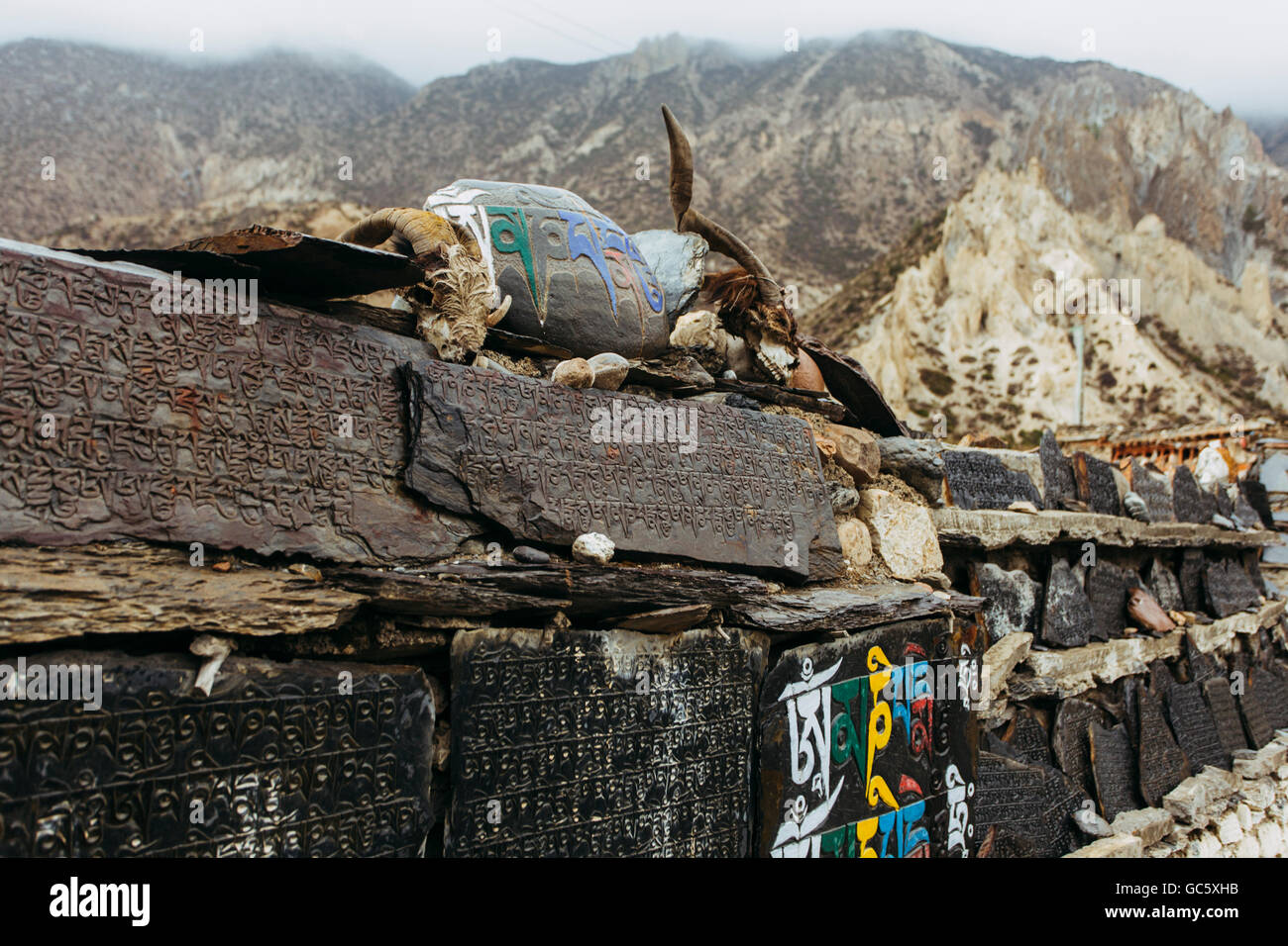 Tibetan scriptures on the stones with skull of a dead Yak in Himalayas, Nepal - Stock Image