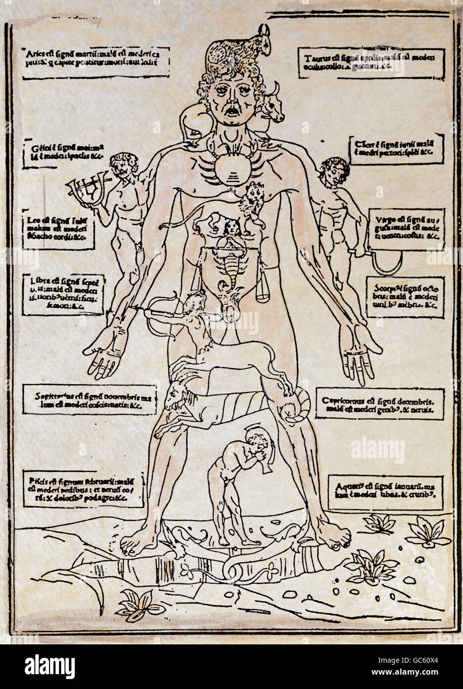 astrology, zodiac man, woodcut from 'Fasciculus medicinae' by Johannes de Ketham, Venice, Italy, 1491, Additional - Stock Image