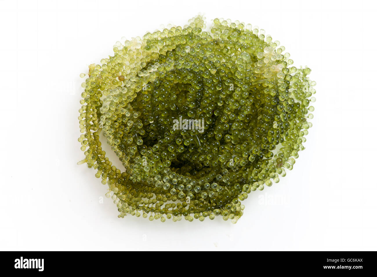 sea grapes or green caviar on white background - Stock Image