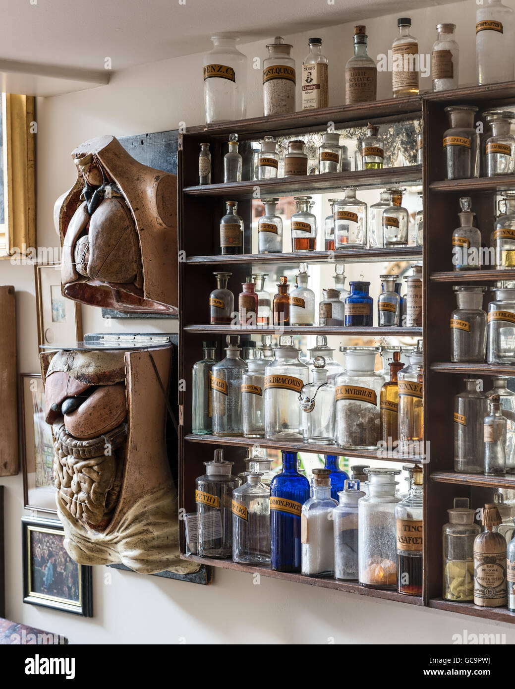 Apothecary jars with anatomical models in London apartment filled with antique curios - Stock Image