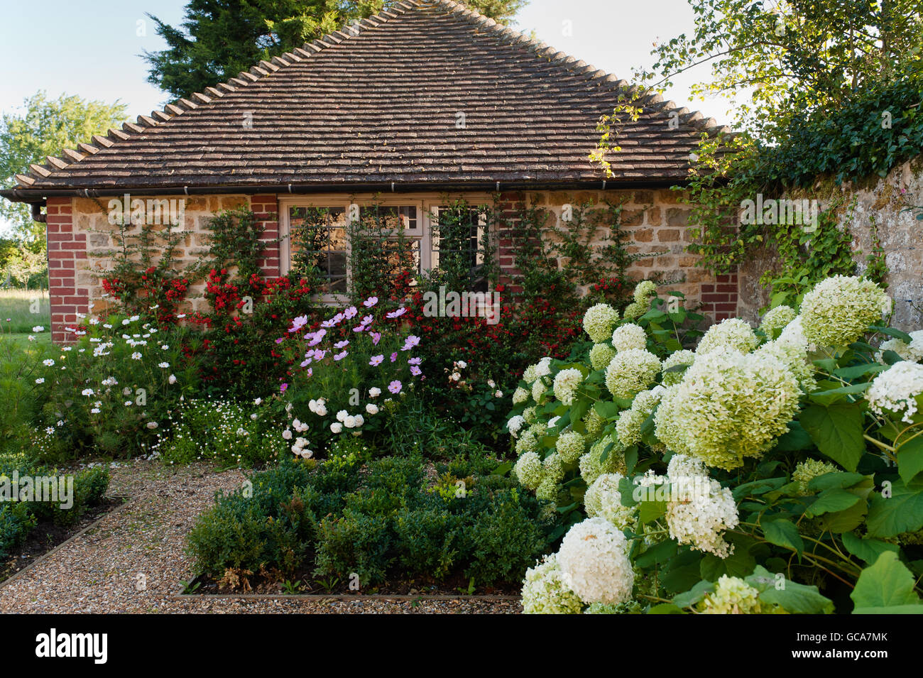 Exterior facade of English country cottage with box hedge and hydrangeas - Stock Image