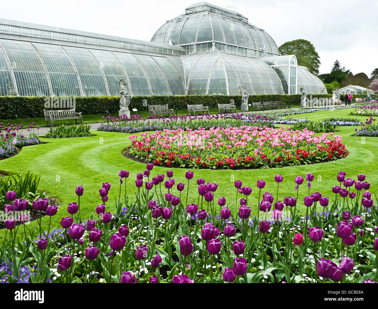 tulip planted flower beds in front of the palm house, kew gardens