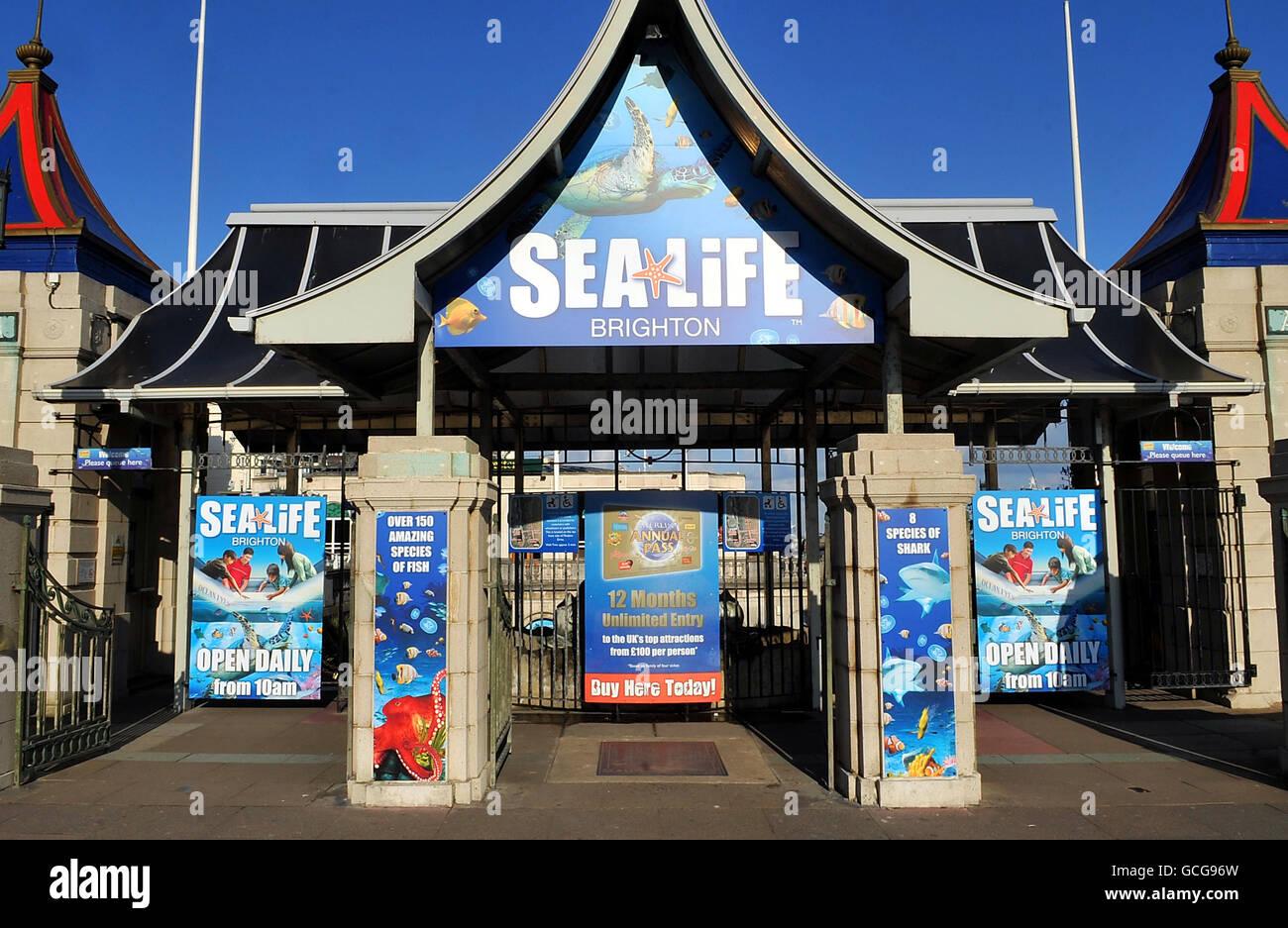 Brighton Sea Life Centre - Stock Image