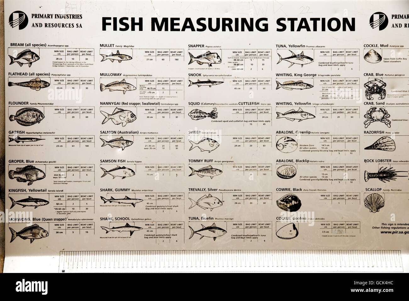 Fish measuring guide on a jetty in Adelaide Australia - Stock Image