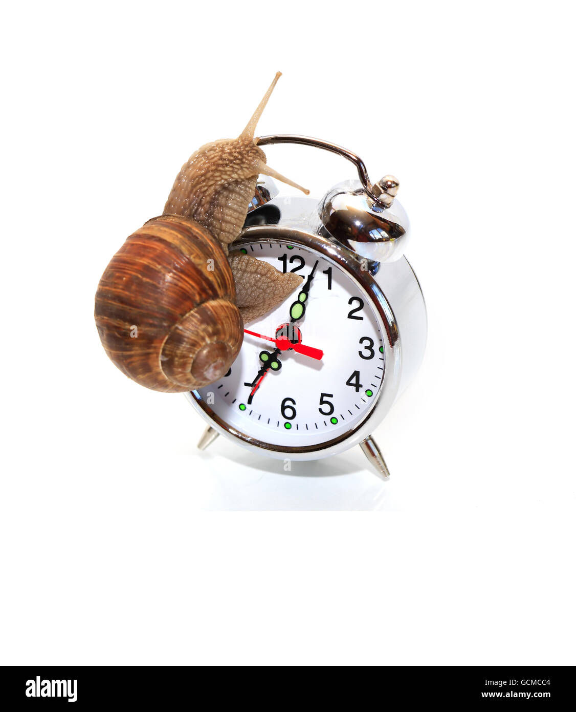 Time concept. Ordinary snail on alarm clock against white background Stock Photo