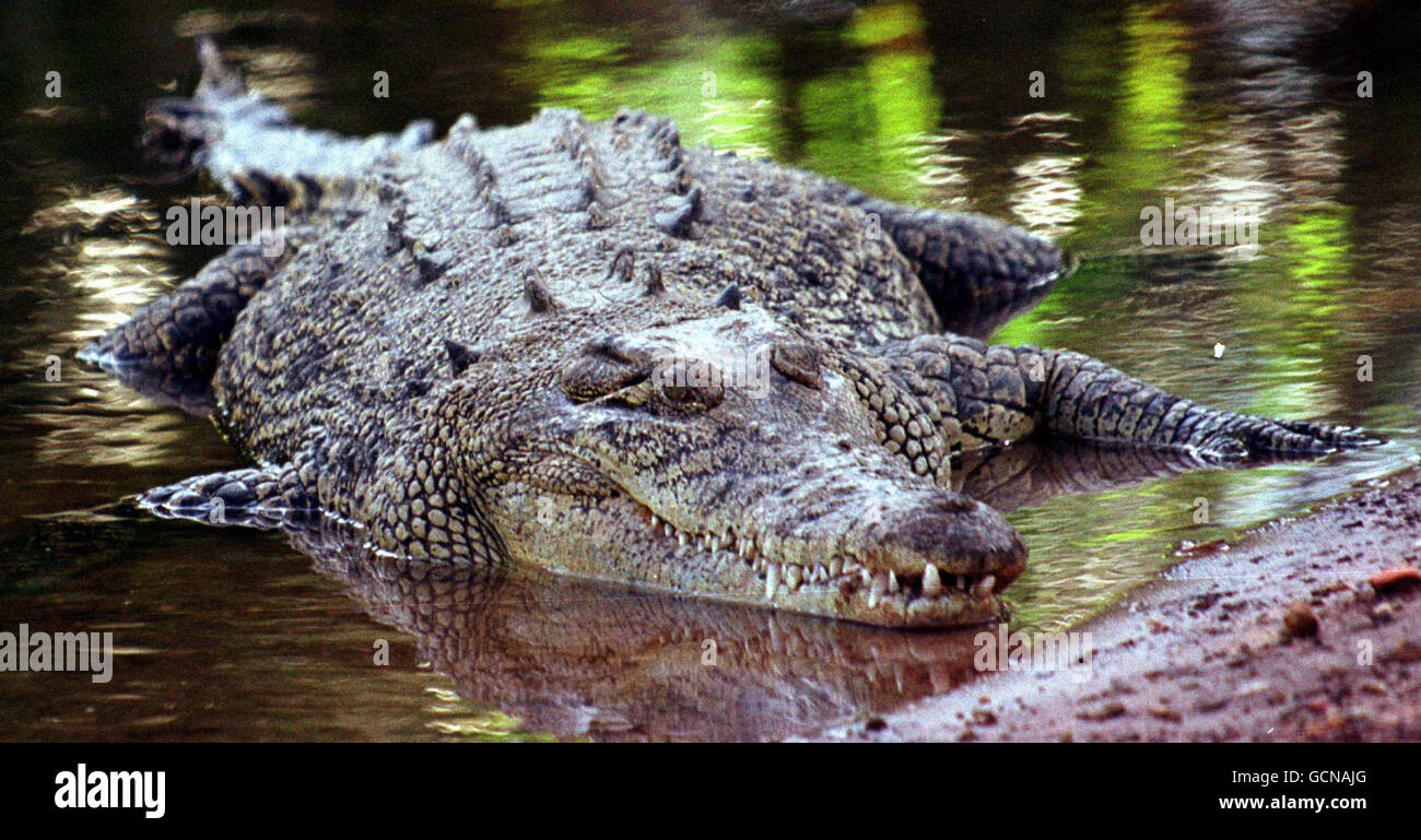 Swimmers warned amid French crocodile claim - Stock Image