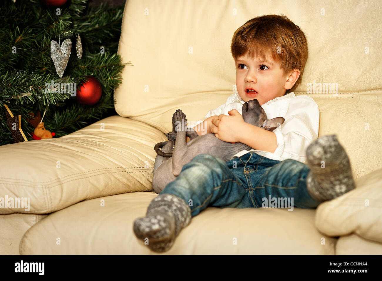 Small boy on the sofa at the Christmas tree. Holding sphinx cat. - Stock Image