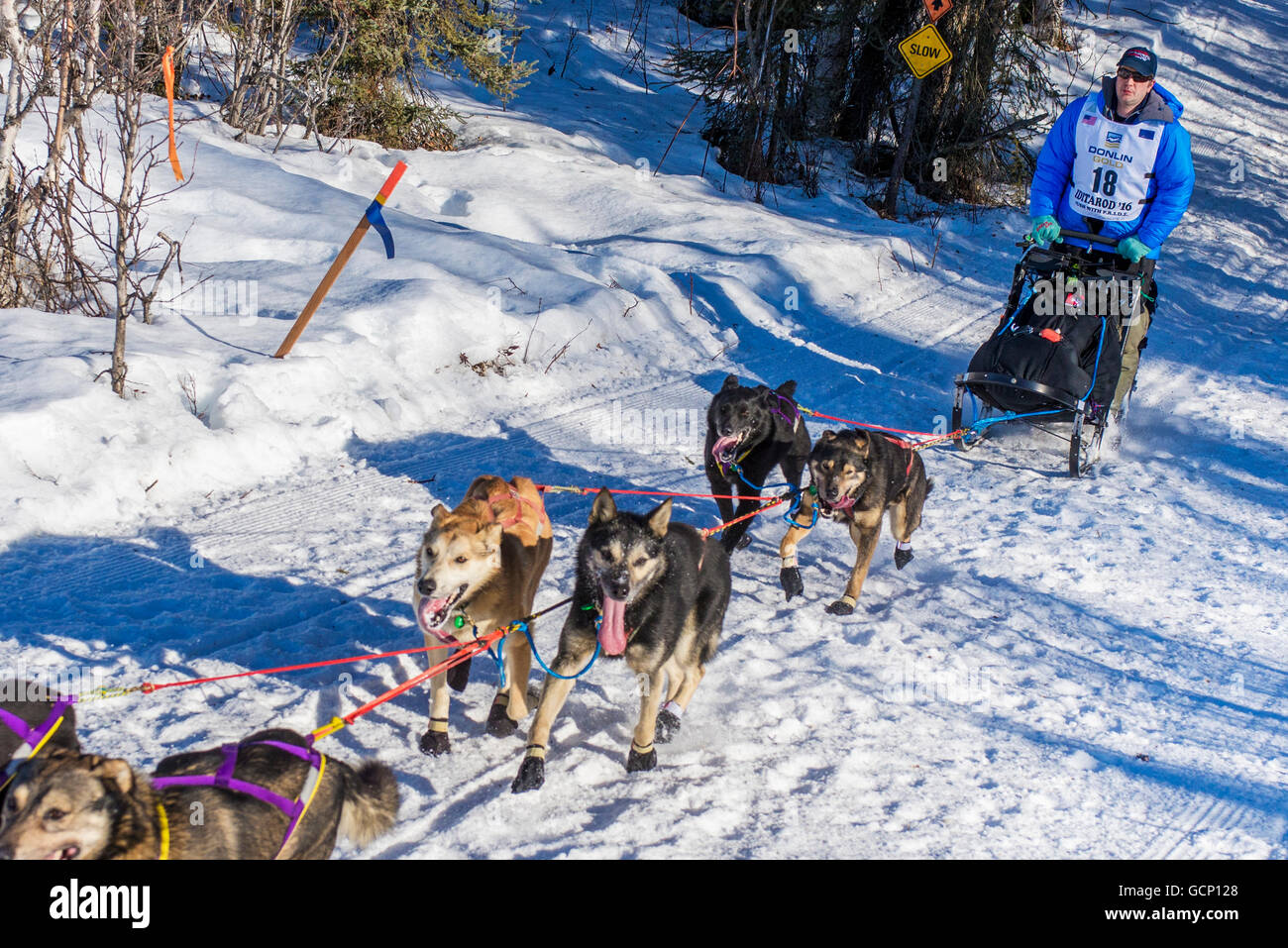 Ray Redington Jr. and team run down the trail on Long Lake shortly after leaving the re-start in Willow, Alaska - Stock Image
