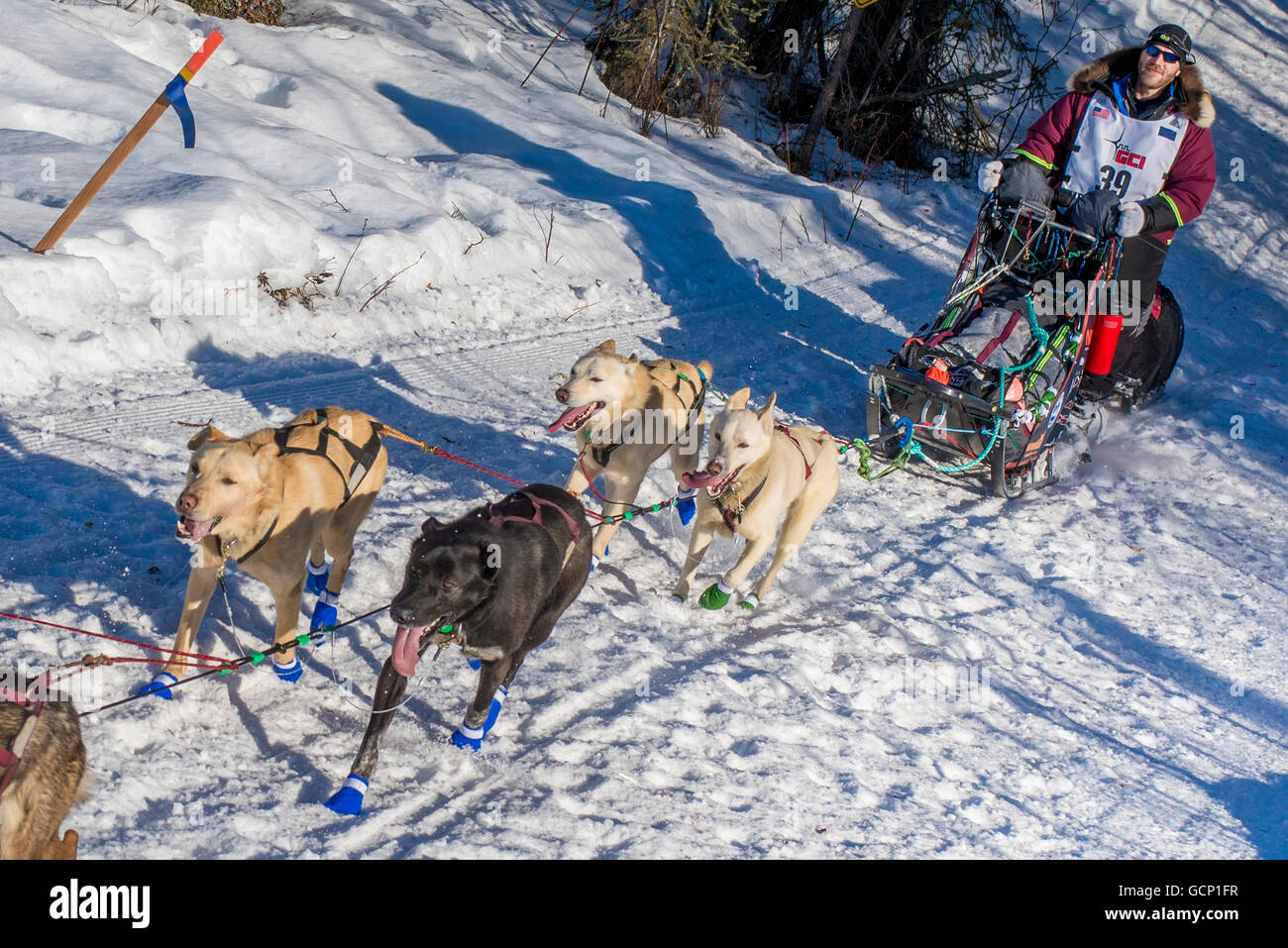 Noah Burmeister and team run down the trail on Long Lake shortly after leaving the re-start in Willow, Alaska during - Stock Image
