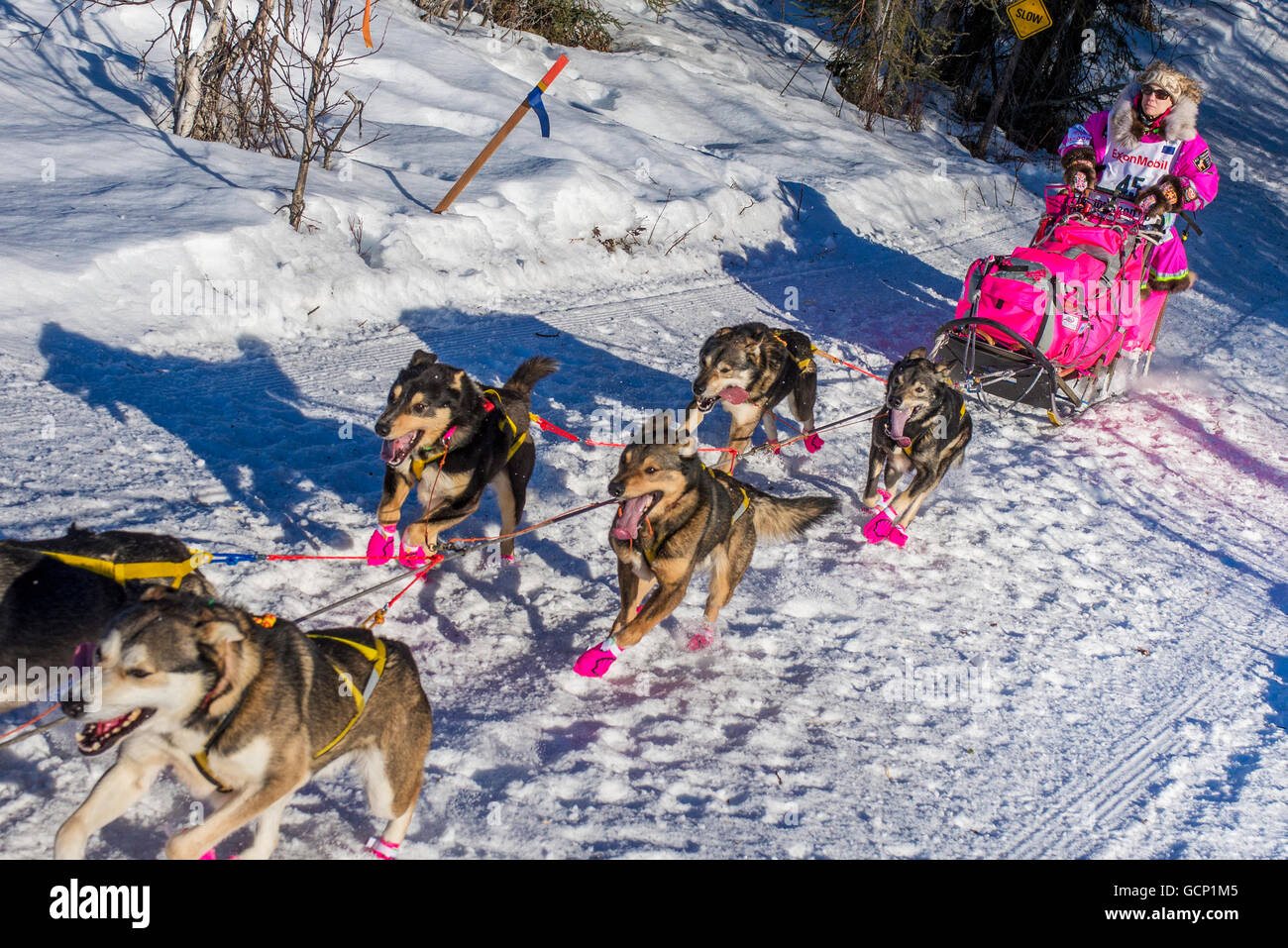 DeeDee Jonrowe and team run down the trail on Long Lake shortly after leaving the re-start in Willow, Alaska during - Stock Image