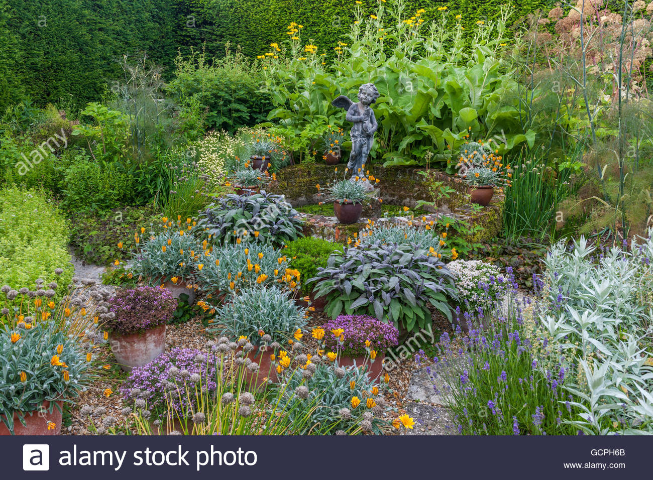 herb garden pots and containers - Stock Image