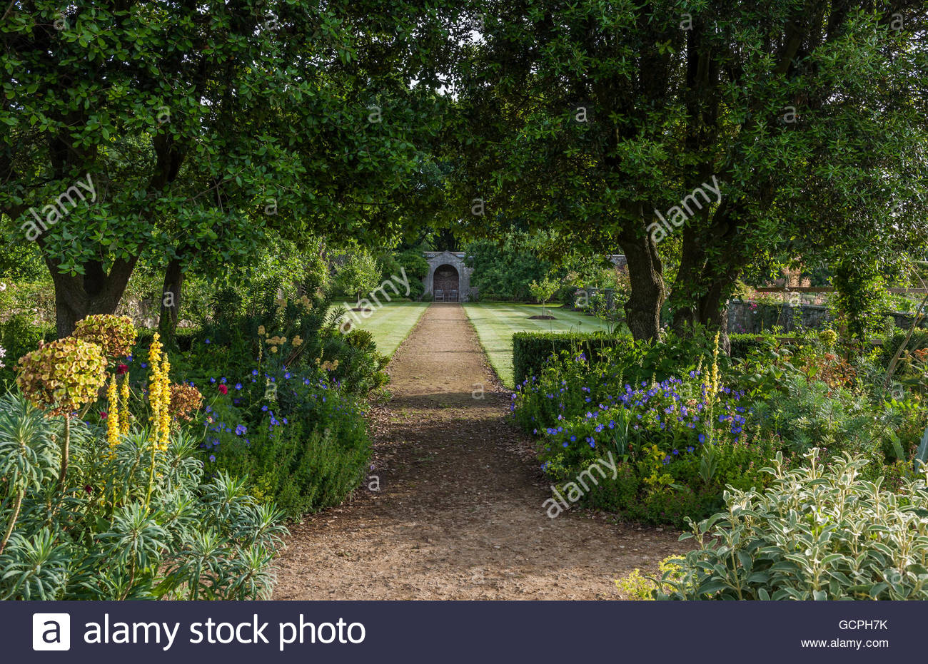 garden flowers and summer borders - Stock Image