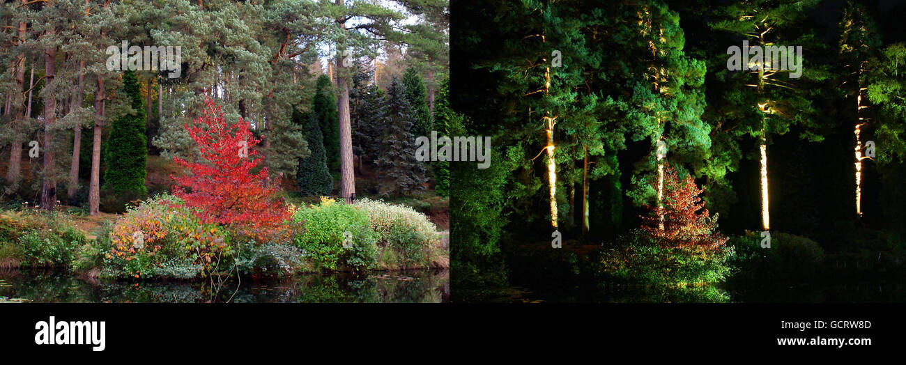 Electric Forest at Bedgebury National Pinetum - Stock Image