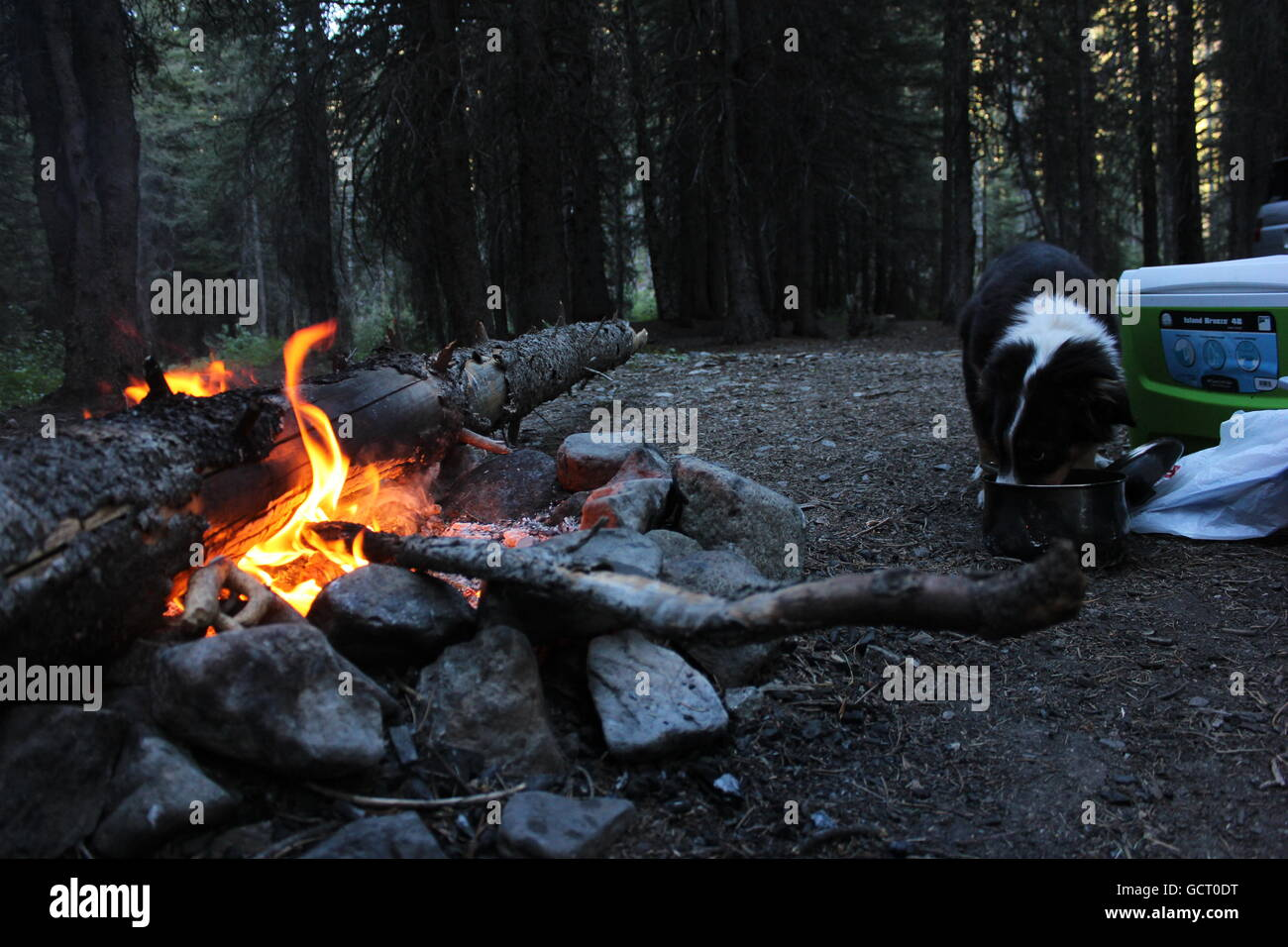 A puppy licks a campfire cooking pot clean while camping. - Stock Image
