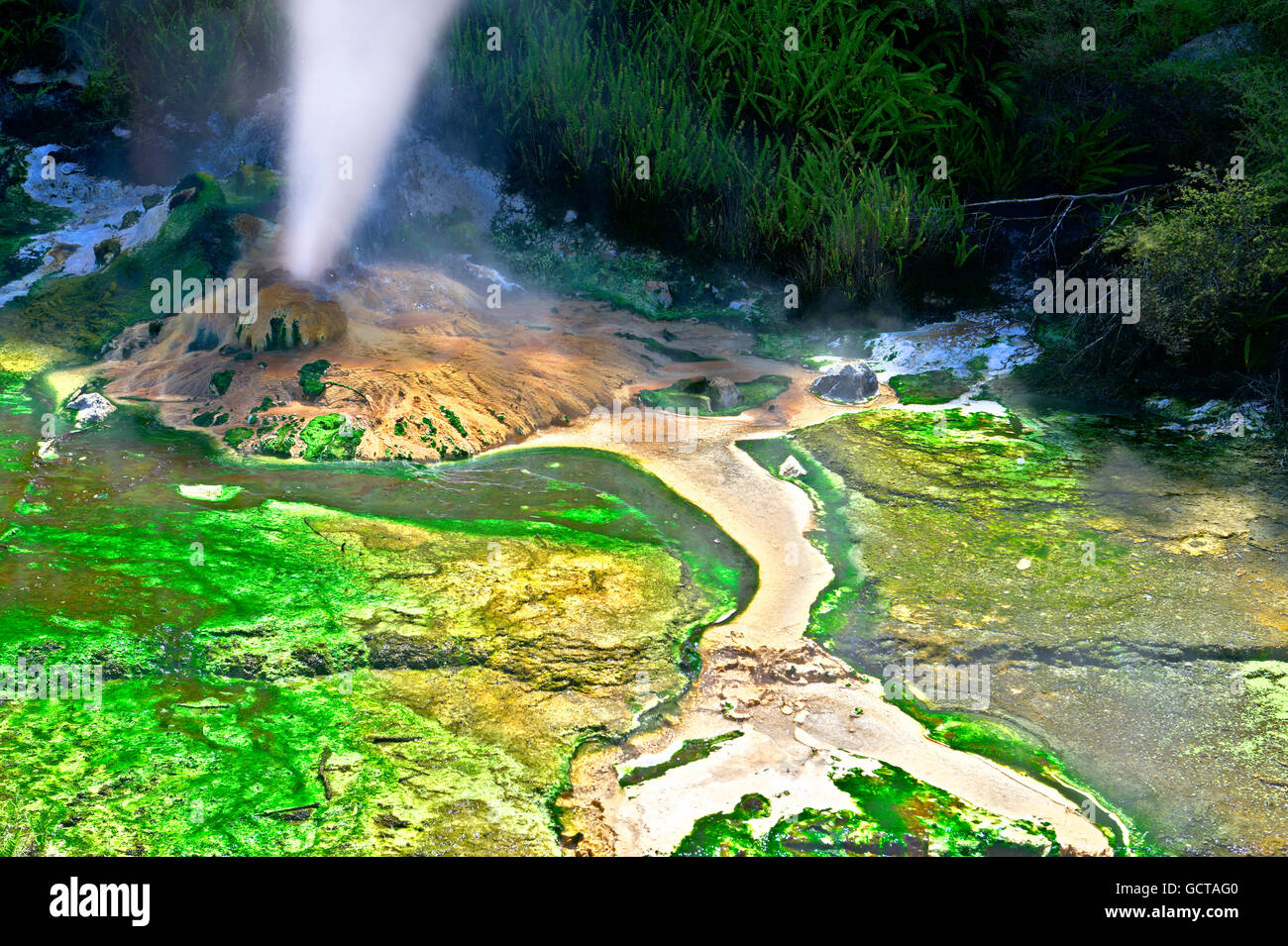 Hot steam flowing out of a volcanic vent surrounded by green algae, Waimangu, New Zealand - Stock Image