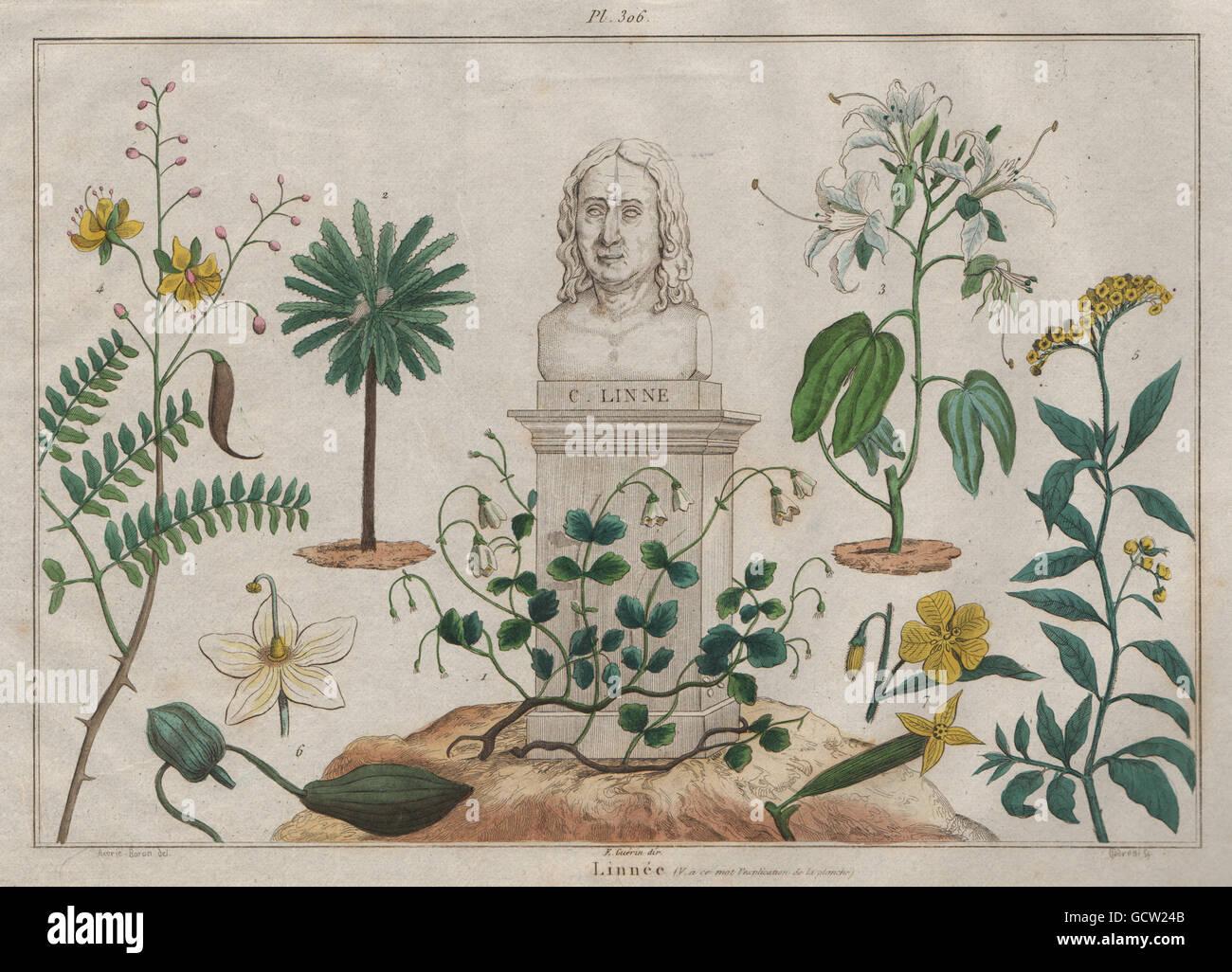 CARL LINNAEUS: Linnée. Botany Zoology Science, antique print 1833 - Stock Image