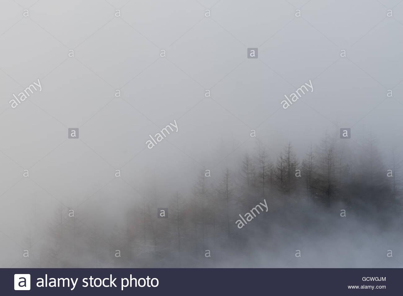 Mam Nick Foggy Trees - Stock Image