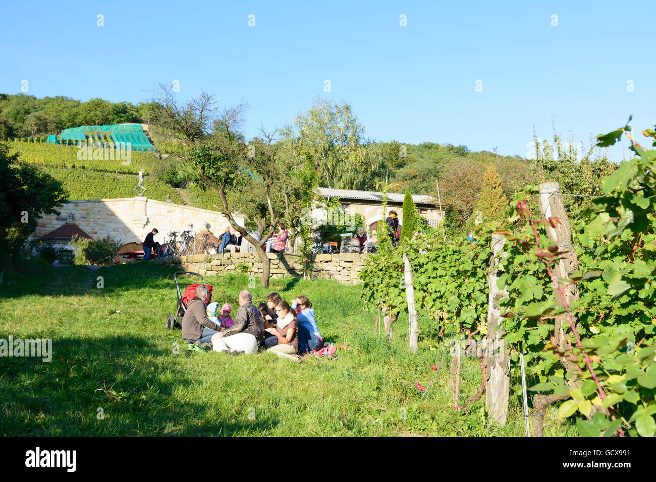 Dresden wine-growing estate Klaus Zimmerling and vineyards Germany Sachsen, Saxony Stock Photo