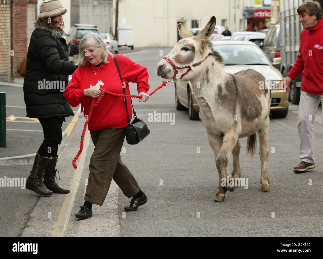 Ann Widdecombe with donkeys - Stock Image