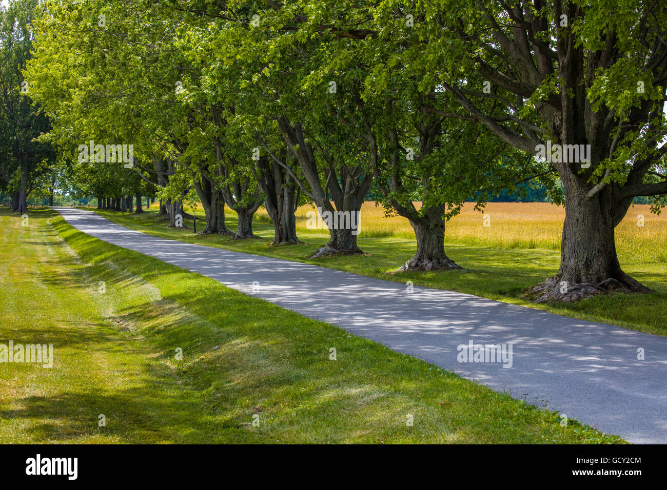 Road and line of trees in knox farm state park in town of - Towne place at garden state park ...