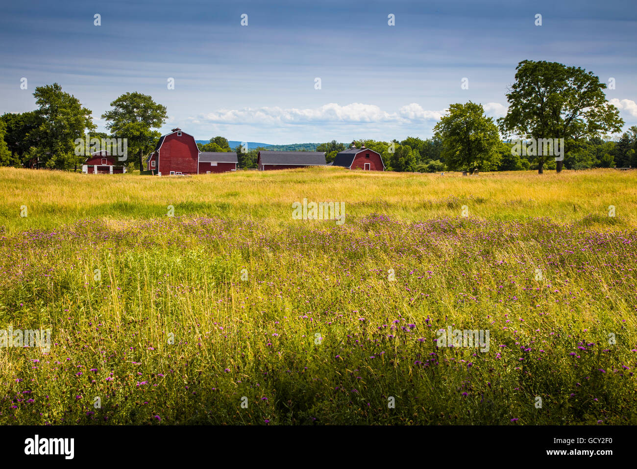 Red barns in Knox Farm State Park in town of East Aurora in Western New York state - Stock Image