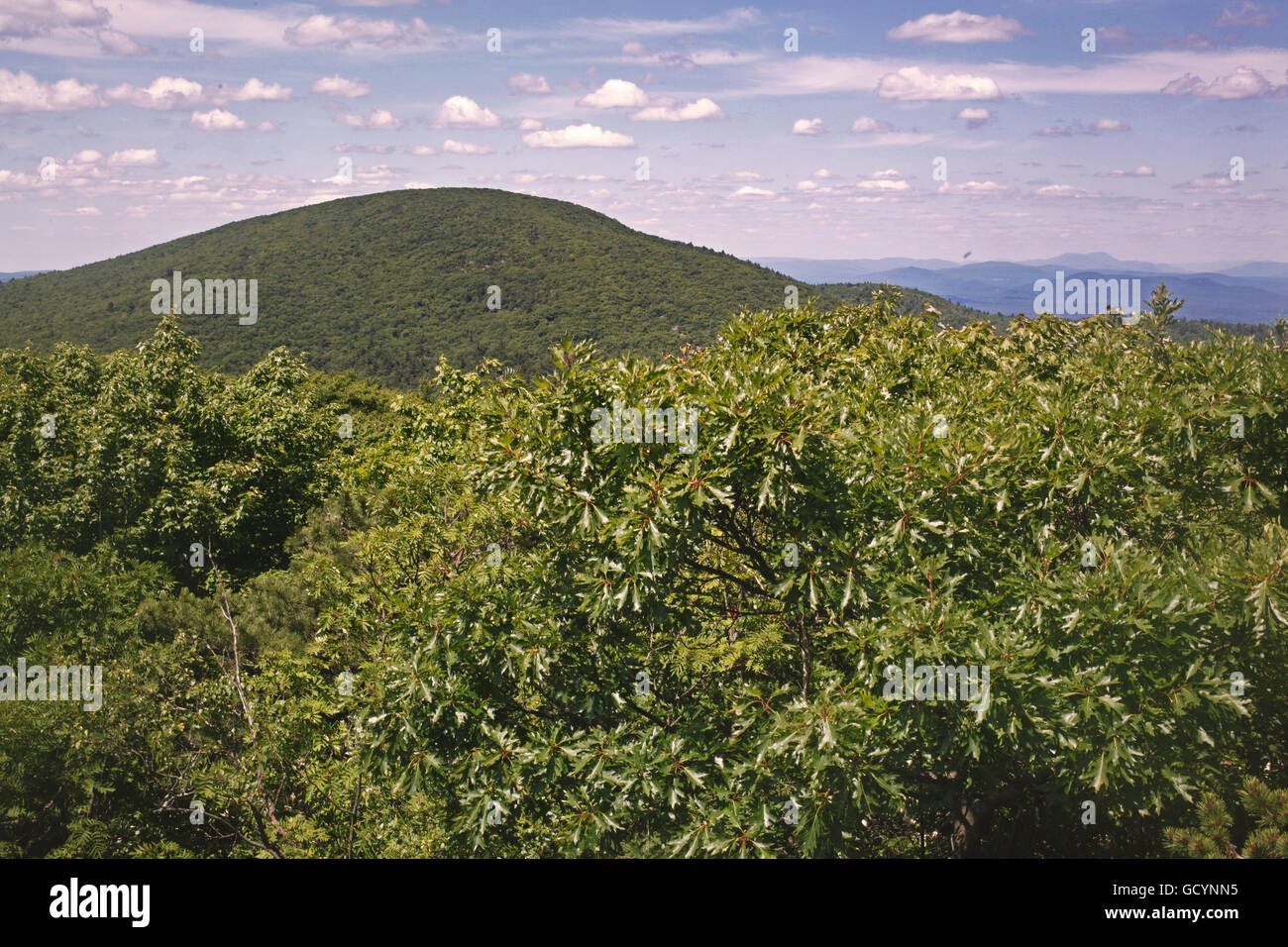 A summer afternoon view of Mount Everett on the Appalachian Trail in Massachusetts. - Stock Image