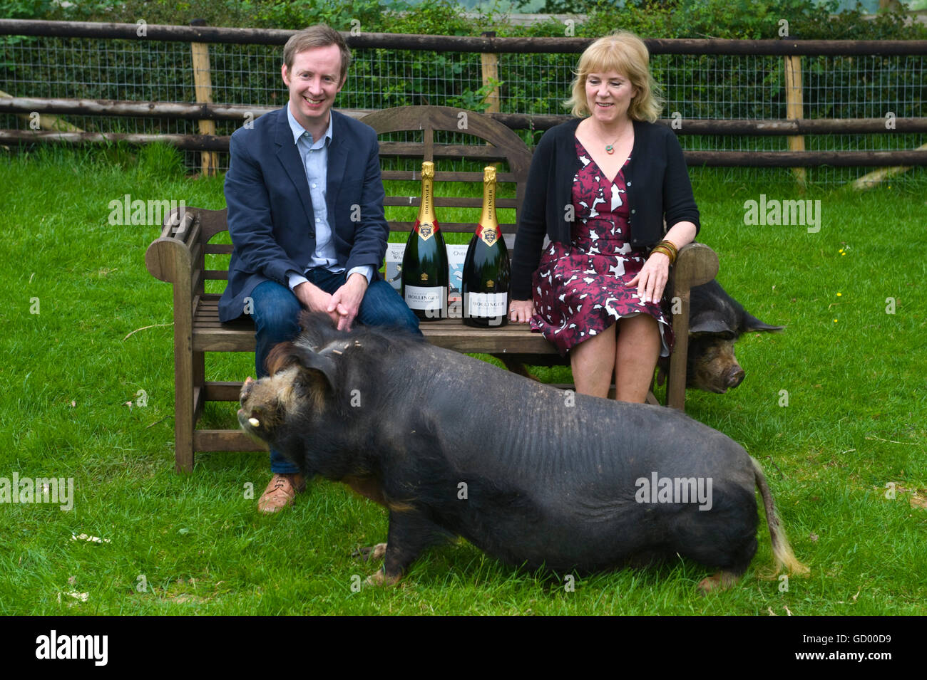 Bollinger Everyman Wodehouse Prize for comic fiction winners Paul Murray and Hannah Rothschild with pigs at  Small - Stock Image