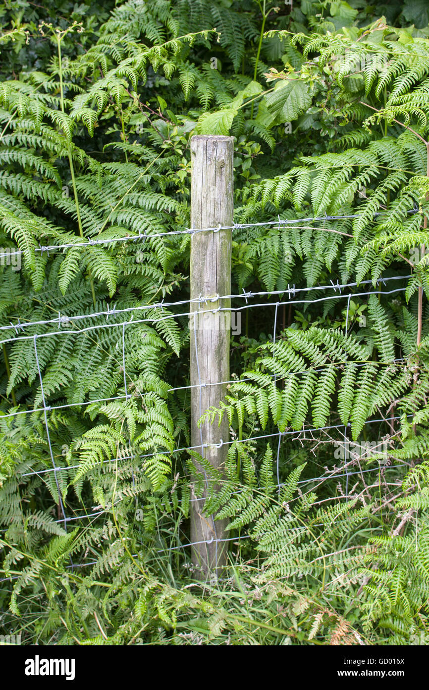 Barbed wire fence on wooden fence post at edge of field - Stock Image