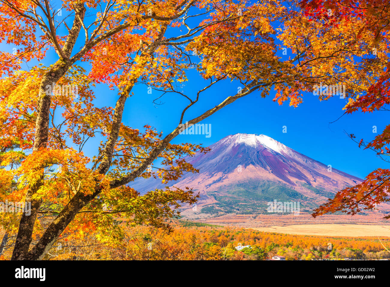 Mt. Fuji, Japan from Yamanaka Lake in autumn. - Stock Image