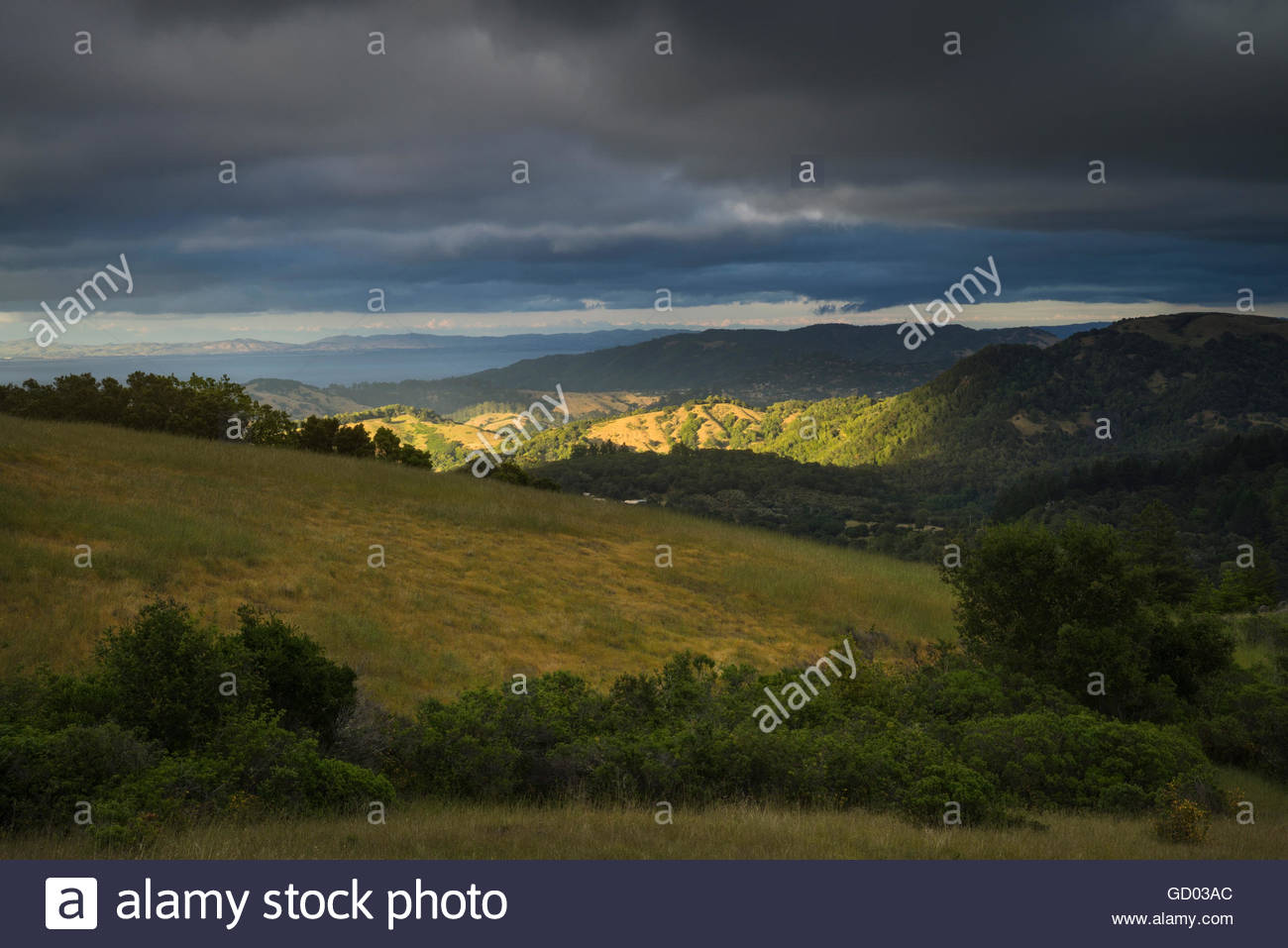 Sunset Light in Mount Tamalpais Watershed, Marin County, California - Stock Image