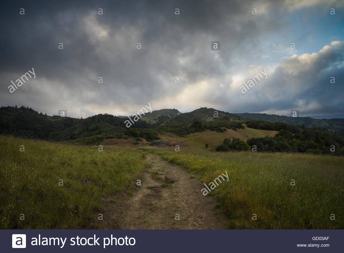 Hiking Trail in Mount Tamalpais Watershed, Marin County, California - Stock Image