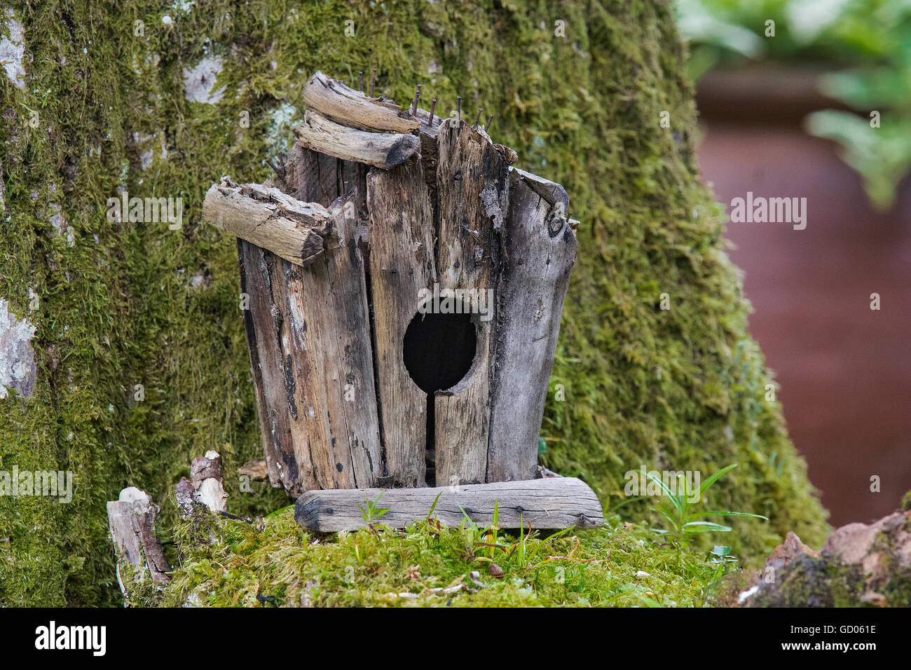 Old bird house, in moss covered tree, Loch Lomond, Scotland - Stock Image
