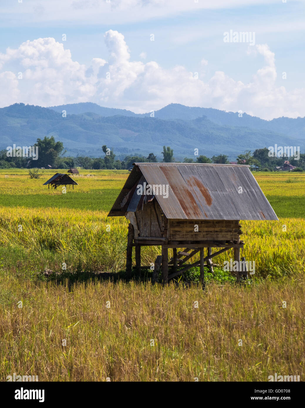 Rice Paddies near Luang Namtha, Laos PDR - Stock Image
