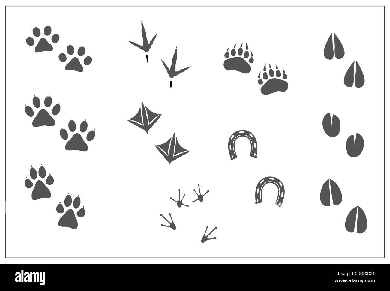 animals footprints cat paw dog paw bear paw birds chicken feet