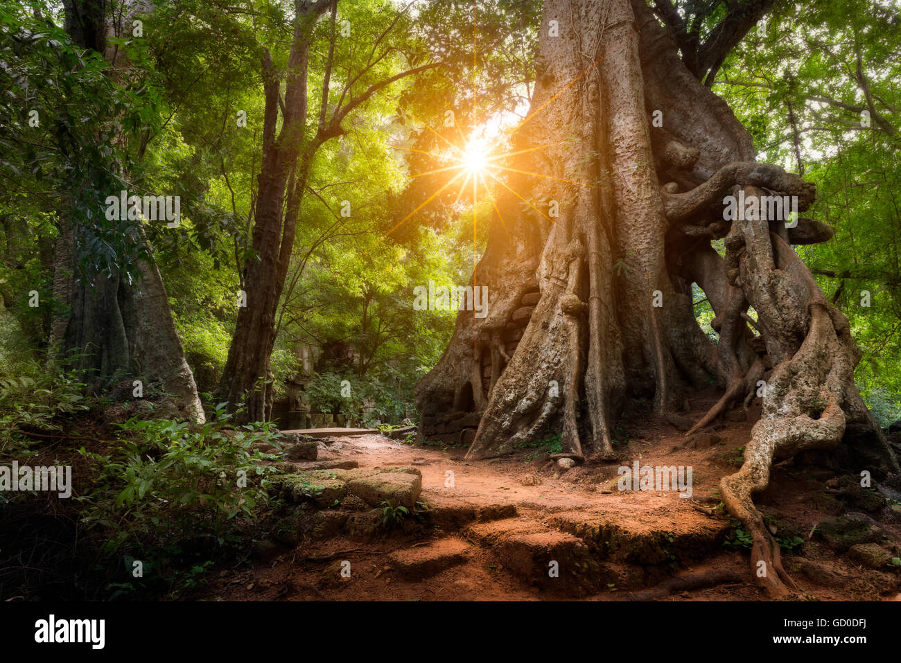 The sun shines through the jungle canopy in Siem Reap, Cambodia. - Stock Image