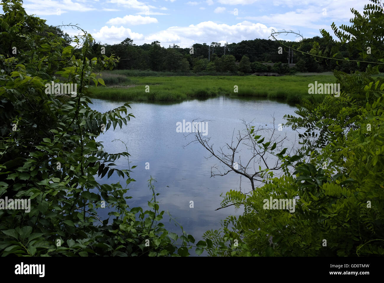 Matawan Creek - Site of the two fatal shark attacks on the New Jersey Shore in July 1916 Stock Photo
