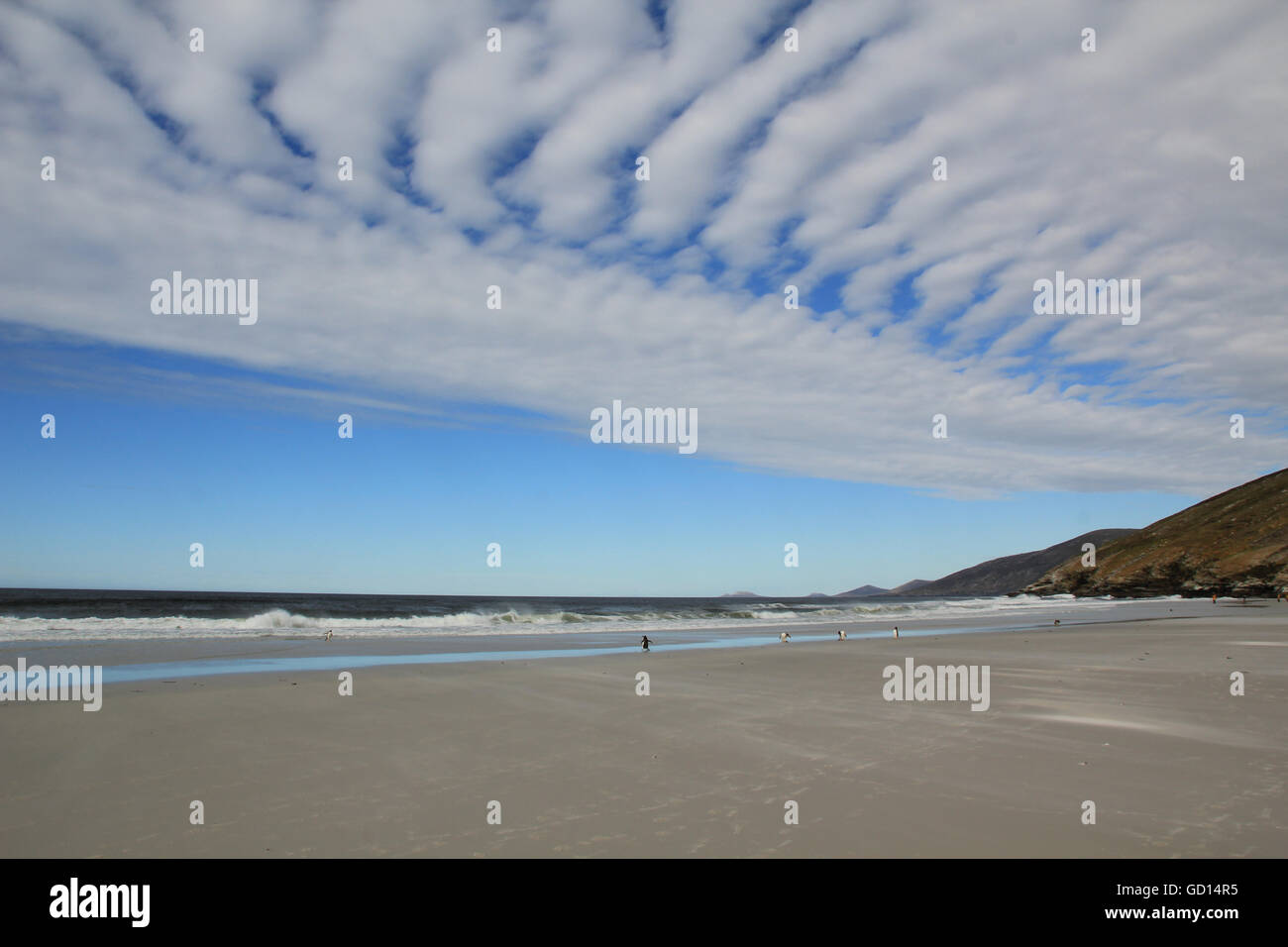 The clouds and beach of Saunders Point, Falkland islands - Stock Image