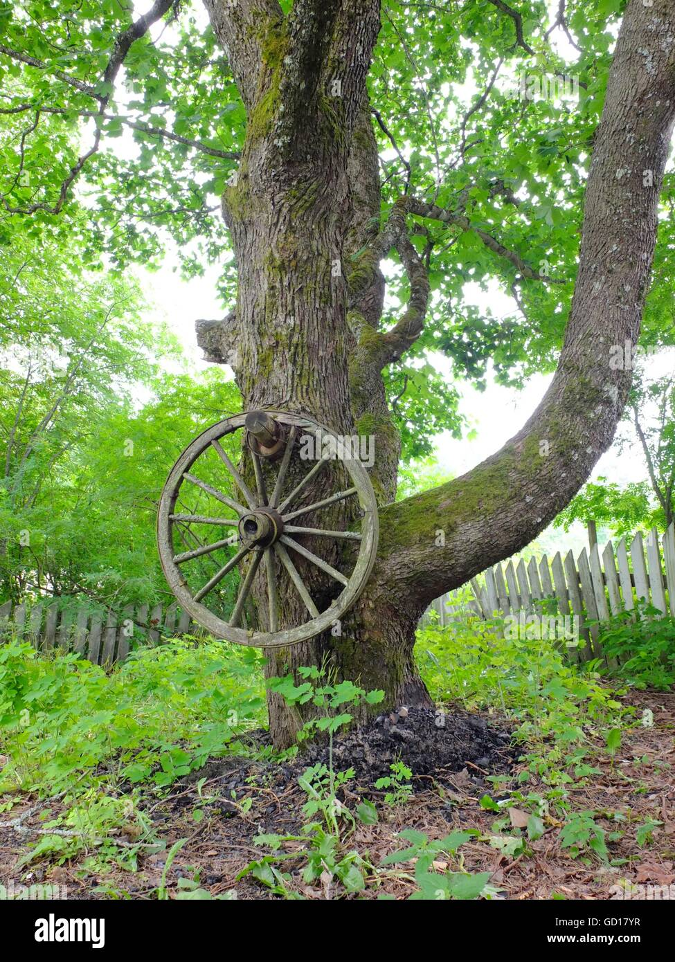 A rustic cartwheel hanging from a tree. Lush green foliage. - Stock Image