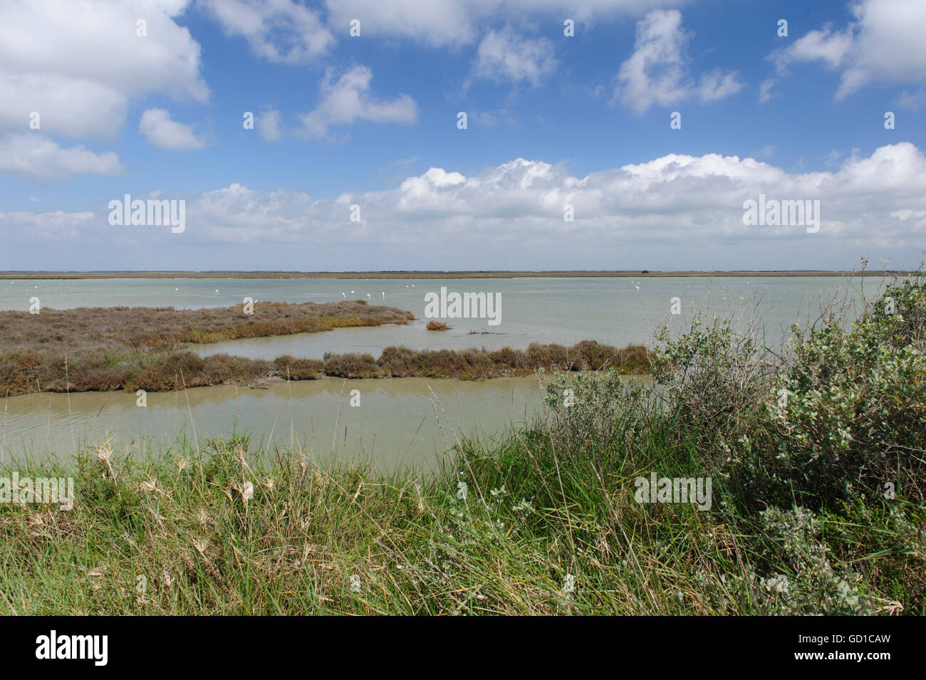 Flamingos in the wetlands of the Camargue. Provence, France - Stock Image