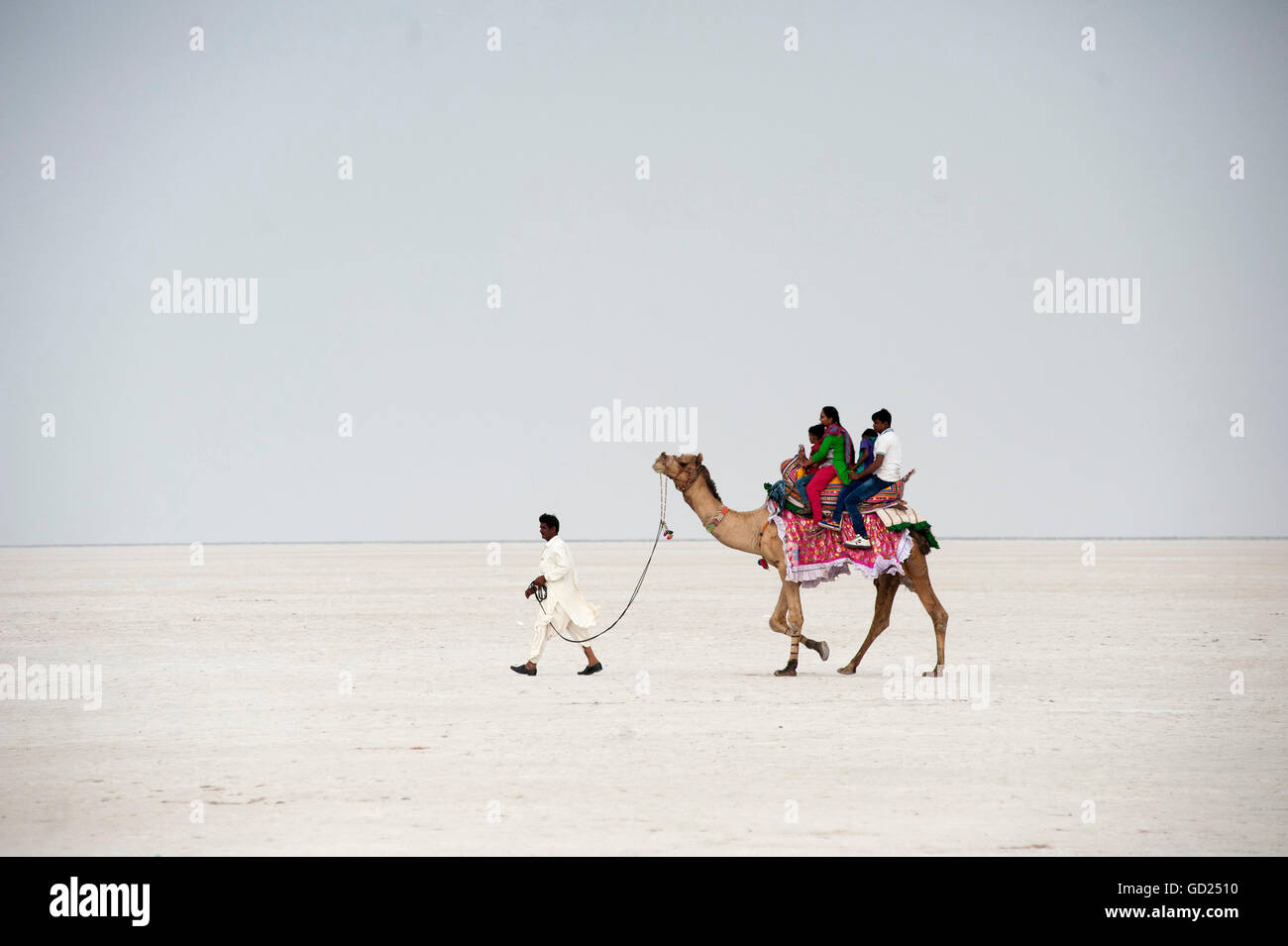 Indian family enjoying a camel ride in the white desert, a seasonal salt marsh in the Great Rann of Kutch, Kutch, - Stock Image